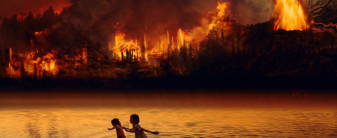 Why the Amazon forest is Burning